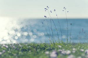 172613__grass-lawn-grass-green-green-plant-spikelets-sea-water-glare-light-sun-wind_p