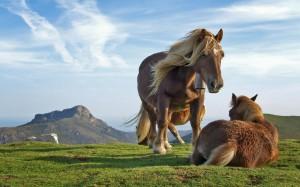hill_horses